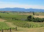 Auntsfield's vineyards