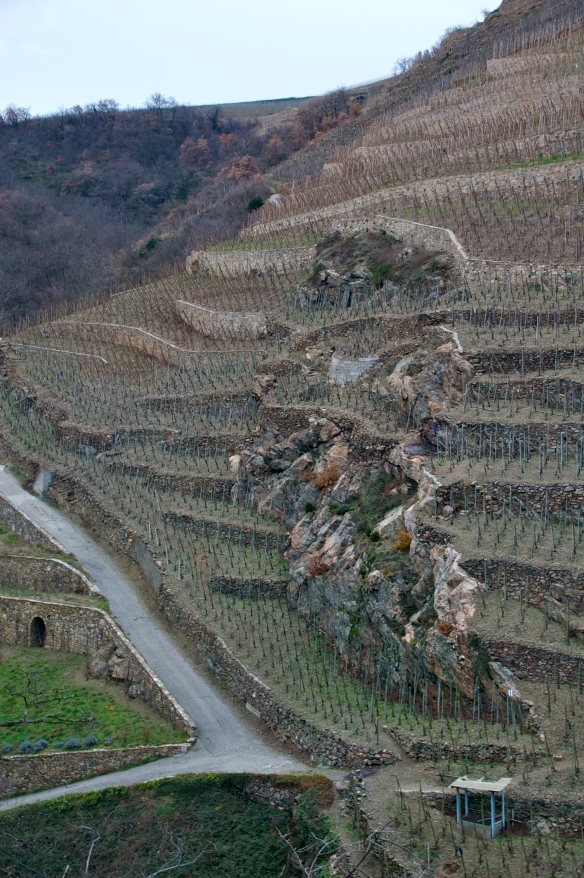 Typical terroir of France's AOC Côte-Rôtie, in the northern Rhône valley